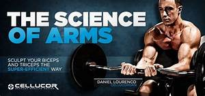 The Science Of Arm Training  Arm Workouts
