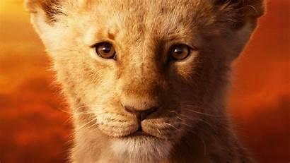 Lion Simba King 4k Mccrary Jd Disney