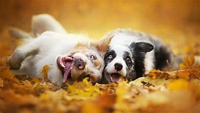 Fall Animals Dog Wallpapers Animal Desktop Depth