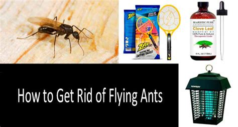 how to get rid of ants in the house how to get rid of flying ants 5 best ant products