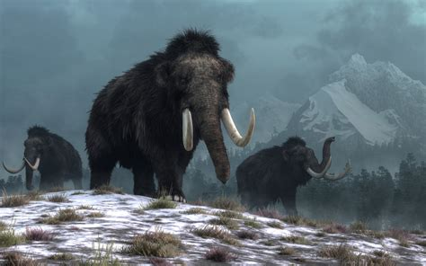 woolly mammoths died  catastrophic event