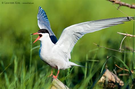vögel füttern ganzjährig hallig birding and bird photography leander khil birdwatching austria v 195 182 gel beobachten in