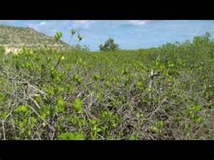 Écotourisme : définition de écotourisme