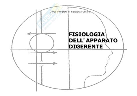 dispense fisiologia fisiologia umana ii somestesia dispense