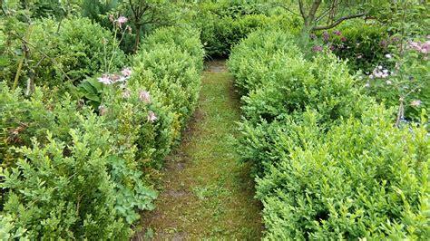 Garten Pflanzen Zeitpunkt by Buchsbaum Schneiden Wann