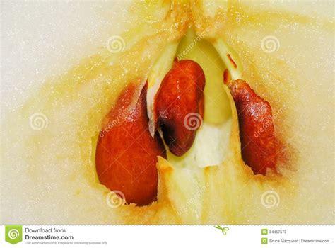 Apple Core stock image. Image of nutrition, macro, slice ...