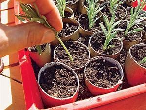 lavendel vermehren pflanzen saen pikieren selbstde With französischer balkon mit pilze selber züchten im garten