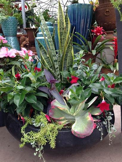Tropical Plants Well Container Midwest Outdoor Diy