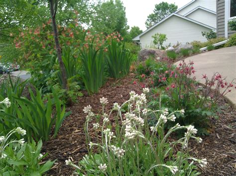 landscaping plant plantings ecoscapes