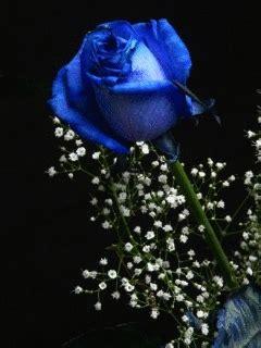 gifs animados de rosas azules gifmania