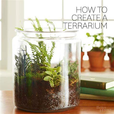 how yo make a terrarium how to create a terrarium
