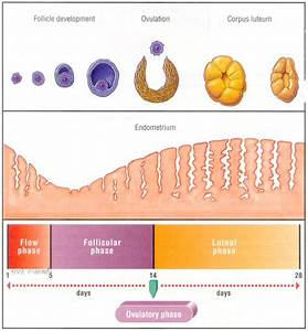 Gallant U0026 39 S Biology Stuff