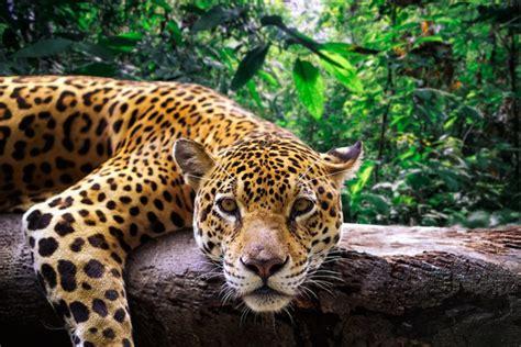 perus massive  national park  protect  million