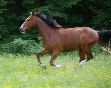 horse animal domestic mammal gallop freepik