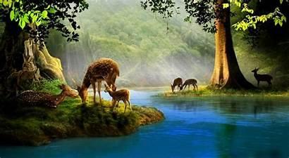 Water Deer Drinking Desktop Backgrounds Painting God