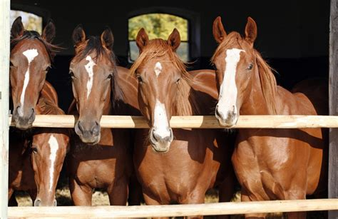 ohio riding horseback horses places domesticated humans communication between equine science