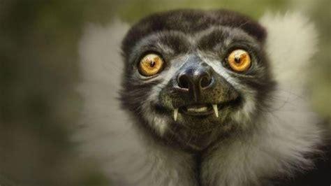 hilarious  cute smiling animals volganga