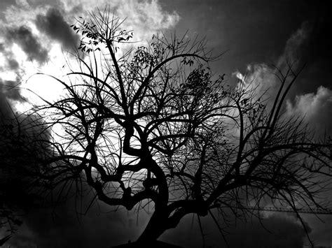 black trees black tree by donsalieri91 on deviantart