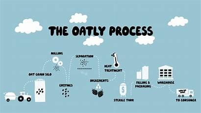 Process Oatly Oat Milk Drink Oatmeal Oatmilk