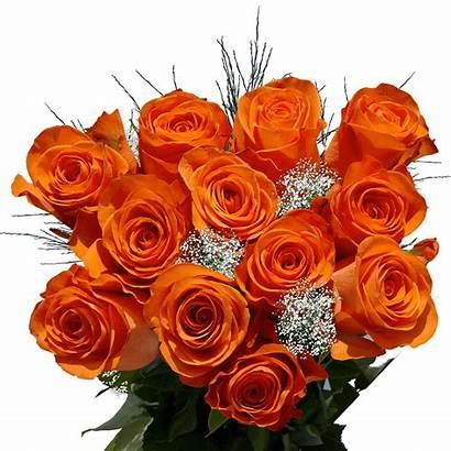 Orange Dozen Roses Delivery Fillers Flower Stems