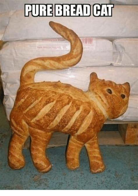 Cat In Bread Meme - 25 best memes about bread cat bread cat memes