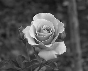 Cee's Black & White Photo Challenge