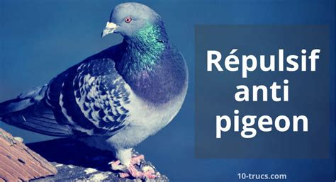 cuisine astuce répulsif pigeons 10 trucs pour les éloigner