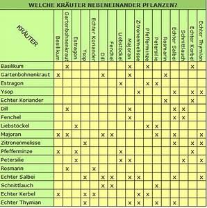 Gemüse Pflanzen Was Passt Zusammen : welche kr uter nebeneinander pflanzen ~ Lizthompson.info Haus und Dekorationen