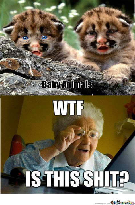 Baby Animal Memes Still Searching For Baby Animals By Recyclebin Meme