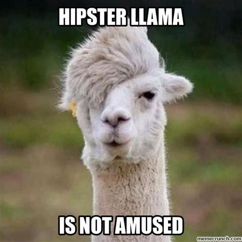 Llama Meme - hipster llama