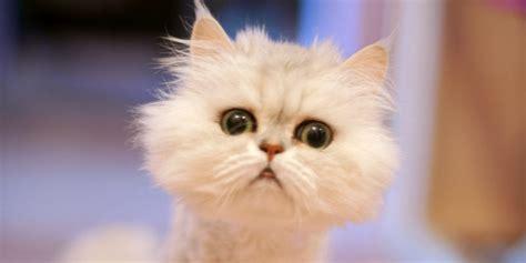 jeux de cuisine de la reine des neiges les vidéos les plus drôles de chats toute l actu