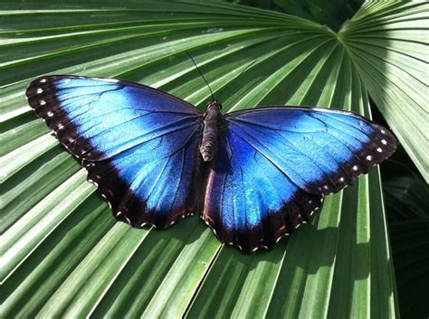 Butterflies have Scales? Really! - Lewis Ginter Botanical
