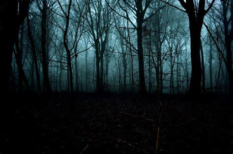 Foggy Forest At Night Time  Wwwimgkidcom  The Image