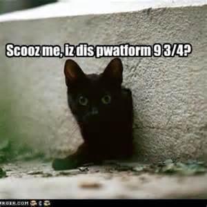harry potter cat potter cat lololol