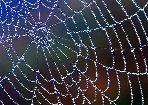 Dew On Spider Webs