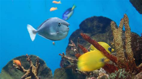 aquarium de barcelone tarif aquarium de barcelone barcelone r 233 servez des tickets pour votre visite getyourguide fr
