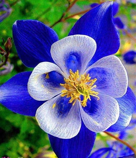 17 Best Images About Unusual Flowers On Pinterest Red