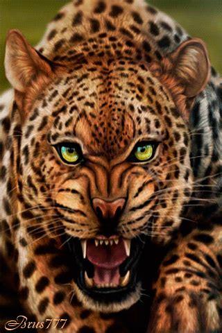 Jaguars Moving by Juani Rios Acinemagraph