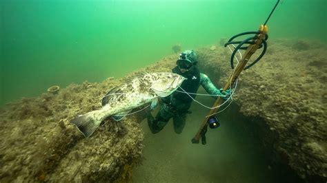spearfishing grouper ocean dangerous shot giant