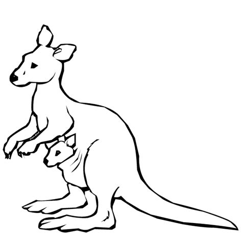 animal coloring kangaroo coloring pages kids