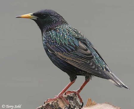 michigan bird identification flashcards by proprofs