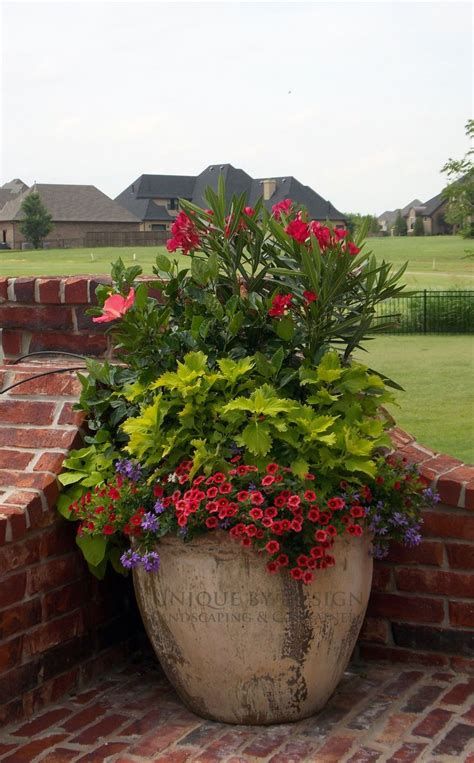 pretty planter container garden