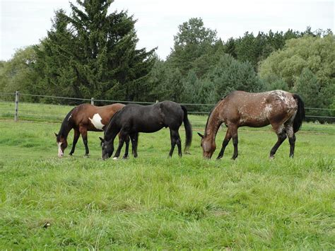 pasture horse horses mix kentucky seed designed