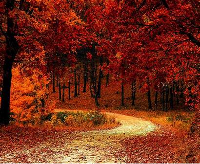 Fall Foliage Autumn Wallpapers 5k Park Nature