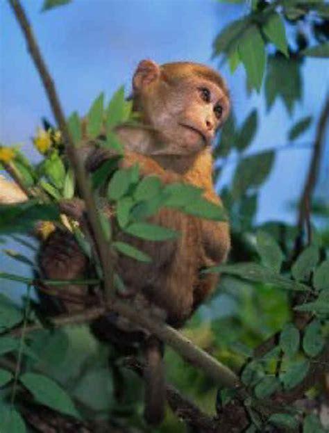 monkeys   primates  animal exploitation
