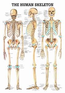 Bones Uc5d0  Uc788 Ub294  Ud540