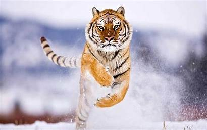 Wild Wallpapers Animals Animal