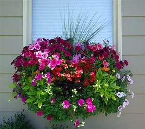 Blumen Für Südbalkon : blumenkasten f r balkon wundersch ne bilder ~ Watch28wear.com Haus und Dekorationen