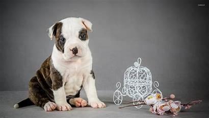 Pitbull Wallpapers Puppy Animal Puppies Dogs Wallpapersafari