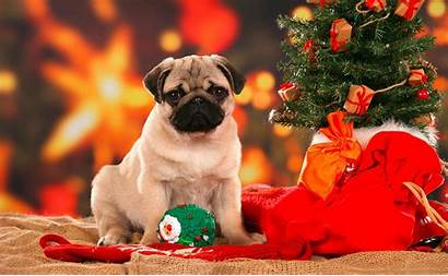 Christmas Puppies Desktop Pug Dog Tree Under